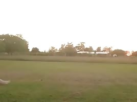 1 Cartwheel in a field